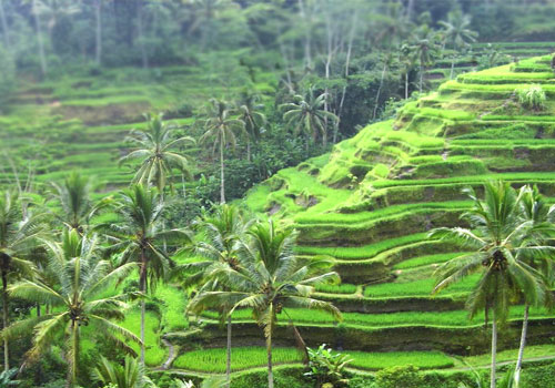 If you ever heard Ubud, crossed your mind that Ubud is Culture. Can be said  that Ubud is Bali's cultural heart. This area is located in the cool  mountains, ...