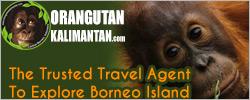 orangutankalimantan.com