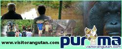 visitorangutan.com