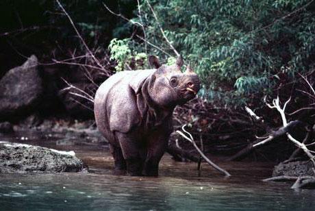 Banten, Entre Debus Et Rhinos