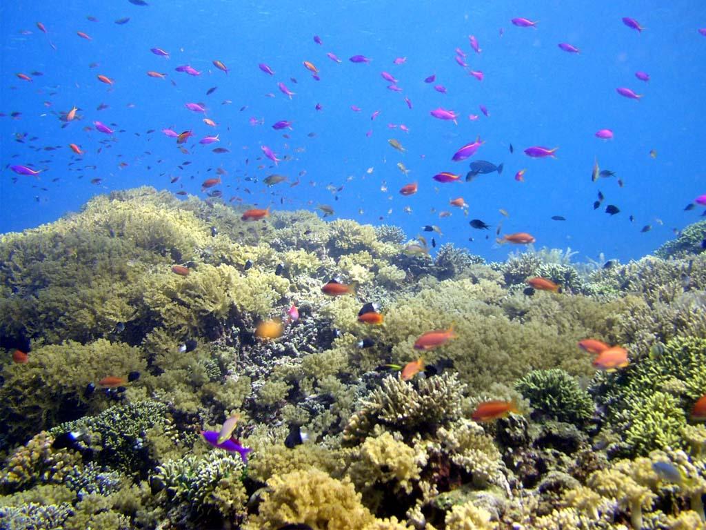 Bunaken the sea paradise