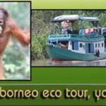 borneoecotour