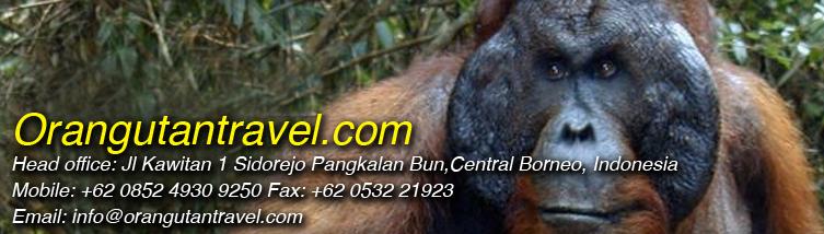 orangutantravel