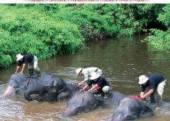 Tesso Nilo Wild Reserve – Riau