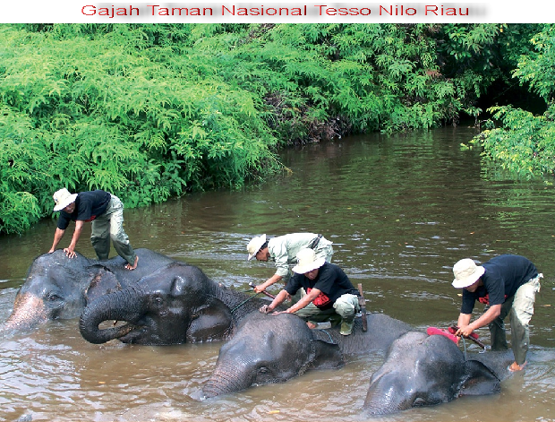 Tesso Nilo Wild Reserve - Riau