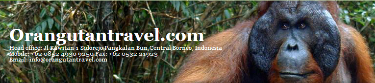 Orang Utan Tour In Borneo Island Offers Orang Utan Travel   Orang Utan Explore   Orang Utan Trip   Dayak Adventure And More