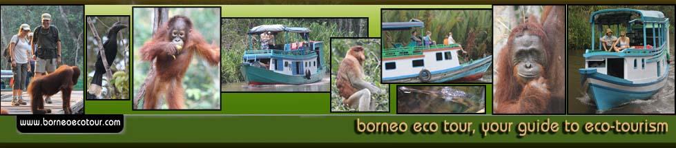 Borneo Lestari Tour, Pangkalan Bun - Central Borneo