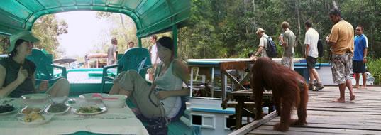 Borneo Wild Life, Pangkalan Bun - Central Kalimantan