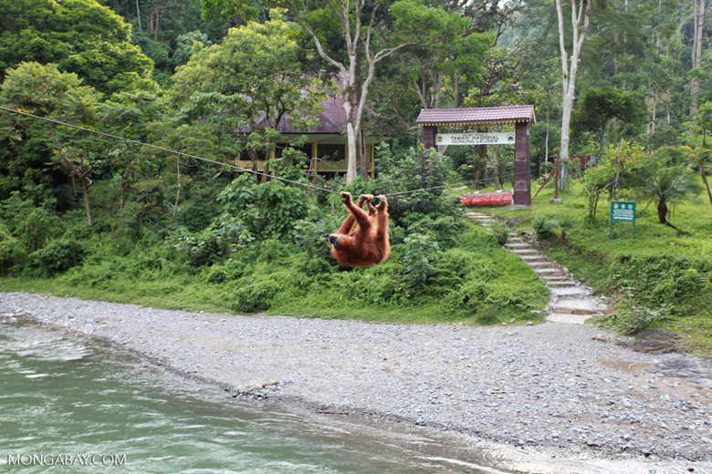 OK but not quite what I expected - The Bohorok Orangutan Centre at Bukit Lawang