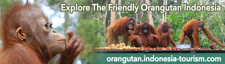 Your Best Companion To Visit Orangutan in Borneo