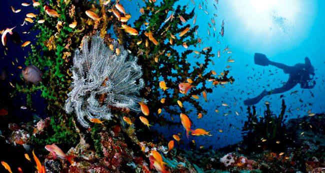 The Best Diving Sites in Indonesia: Weh Island Diving - Diving in Aceh -  Aceh Diving
