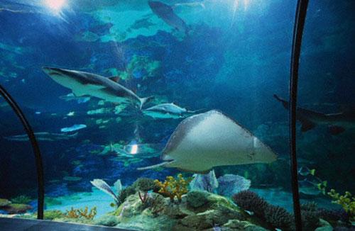 Sea World Tourism