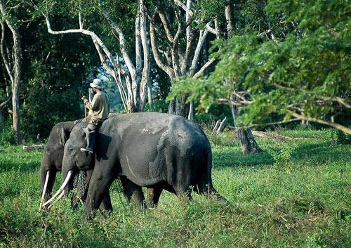 Way Kambas Tourism