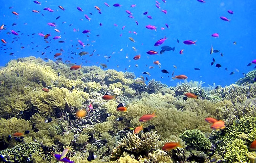 Bhs Indonesianya Diving