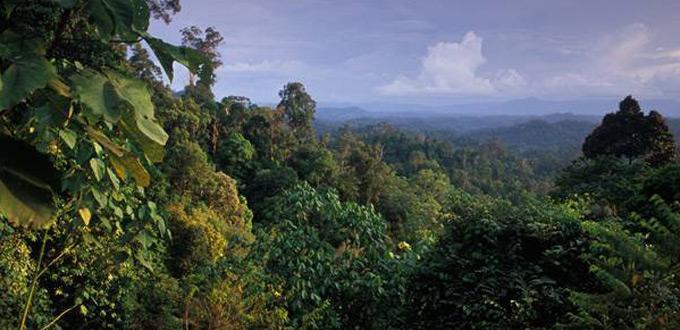 Wehea-Reserve-Orangutan-Wildlife