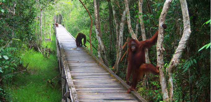 Orangutan_Tour