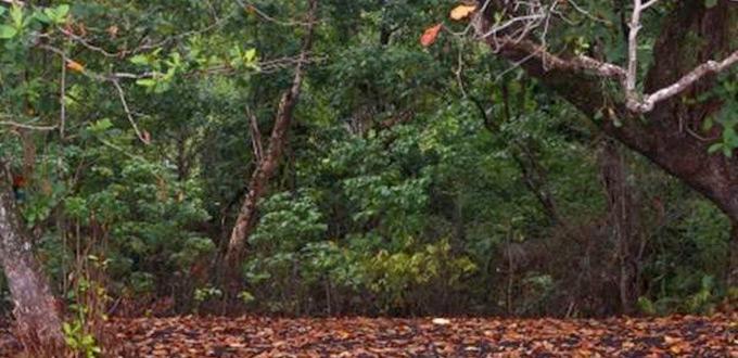 minahasa-tangkoko-nature-reserve