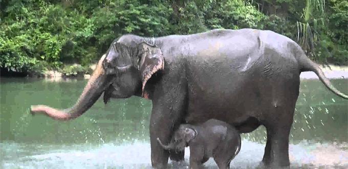 bukit-lawang-north-sumatera-elephant-trekking