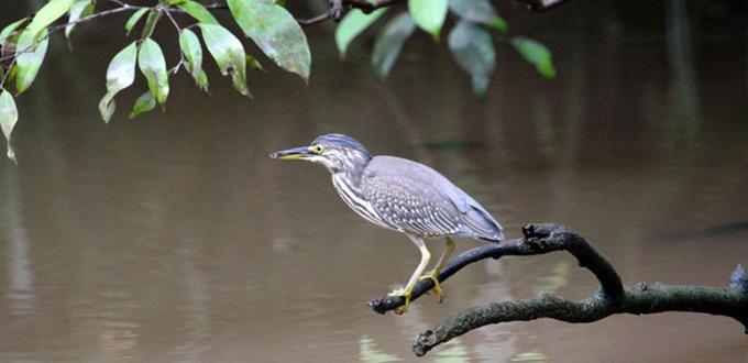 Bird-Watching-Exploration