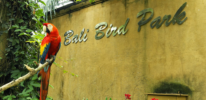 Half Day Bird Reptile Park Tour Tour And Travel Indonesia Guide