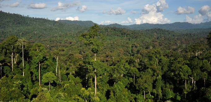 BorneoRainforest