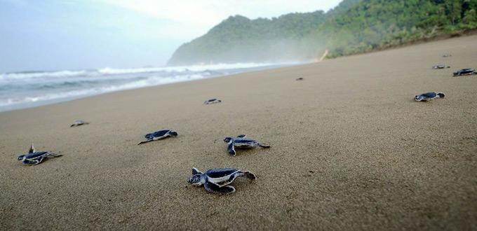 Sukamade-Turtle-Beach-Banyuwangi