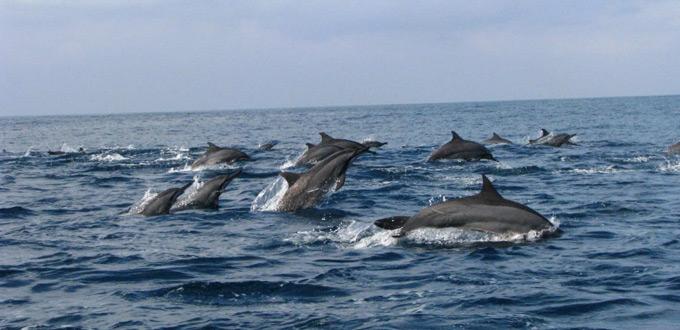 teluk-kiluan-dolphin-island-lampung