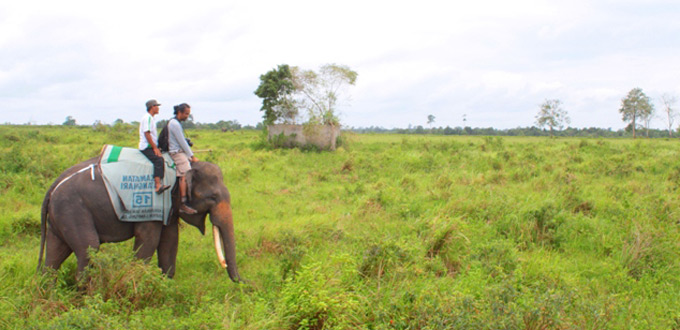 Way-kambas-riding-elephant