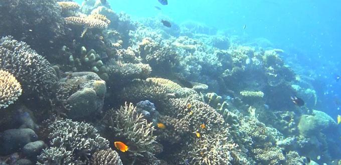 underwater-gorontalo