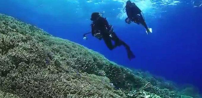 parigi-moutong-diving-central-sulawesi